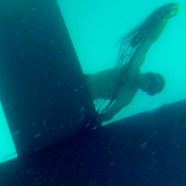 fastnet15-diver