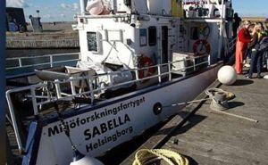 Sabella2